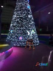 Arboles de Navidad Gigantes 10.5 m 12 m 15 m altura : Centro comercial..Plaza Publica 2