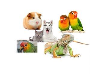 Medicina veterinaria a domicilio