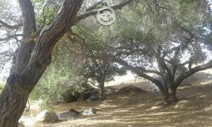 Terrenos valle de guadalupe 2 has agua