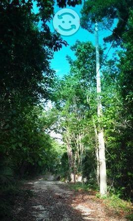 Puerto morelos ruta cenotes km 9 hectarea