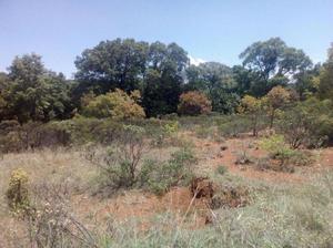 5 hectareas arboladas y con escrituras con servicios a 300 m