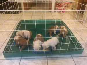 Jaula perro 1 metro cuadrado base desmontable
