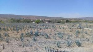 Rancho 70 hectareas en venta en juchitlan
