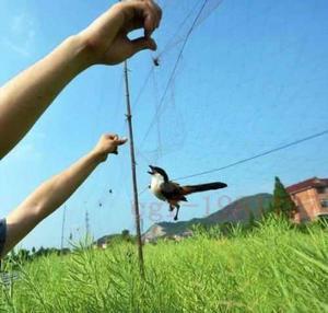 Red de niebla para aves 12x3 mts trampa aves y murcielagos
