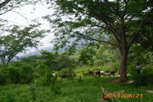 Terreno ecoturistico ganadero