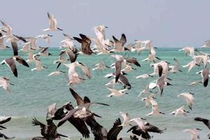Venta de Terreno en Cuyo - Yucatan.