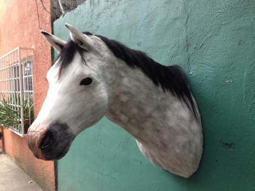 Animales disecados 100% artificiales caballo