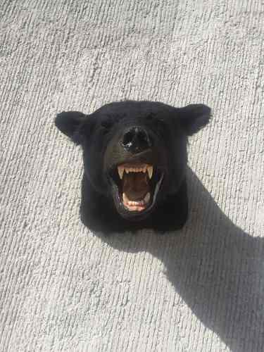 Animales disecados 100 % artificiales oso negro (black bear)