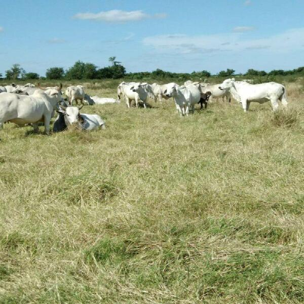 140 hectareas de oportunidad al norte de veracruz (incluye
