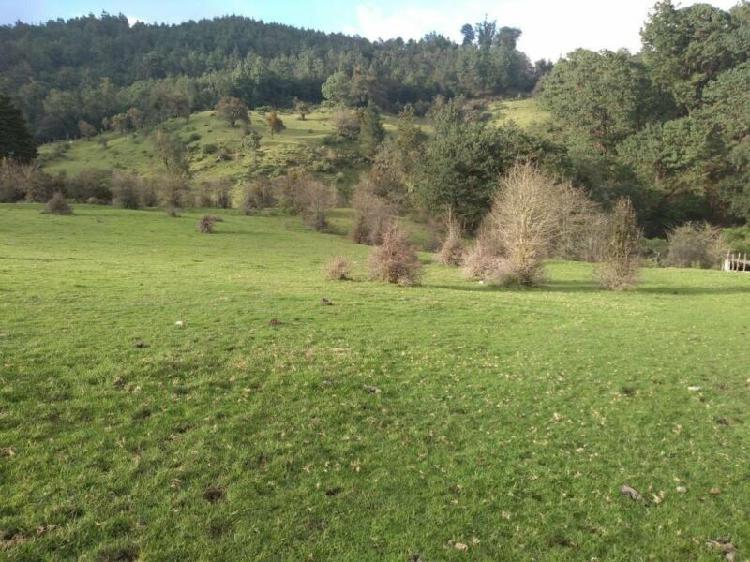 6 bonitas hectareas, bosque, rio, neblina y a solo 25 min.