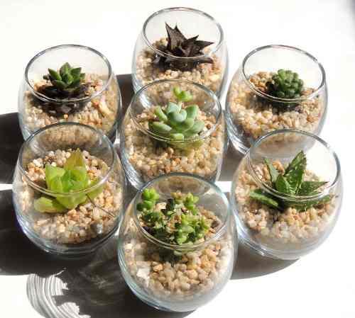Cactus miniatura, adorno para cocina, plantas suculentas
