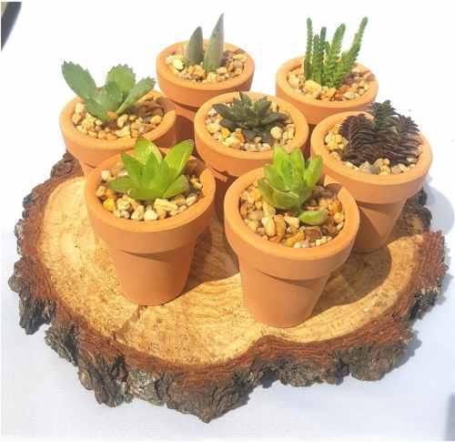 Recuerdos boda, plantas, suculentas, cactus miniatura