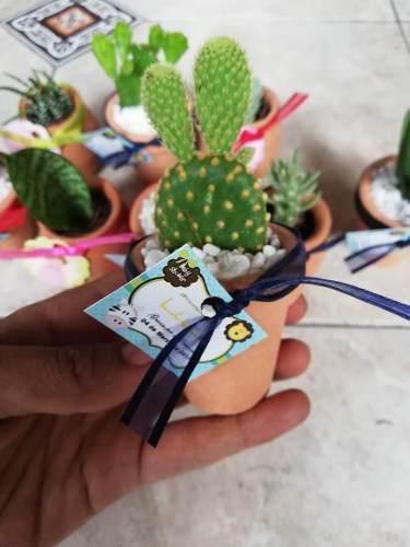 Plantas suculentas miniatura decoradas para recuerdos