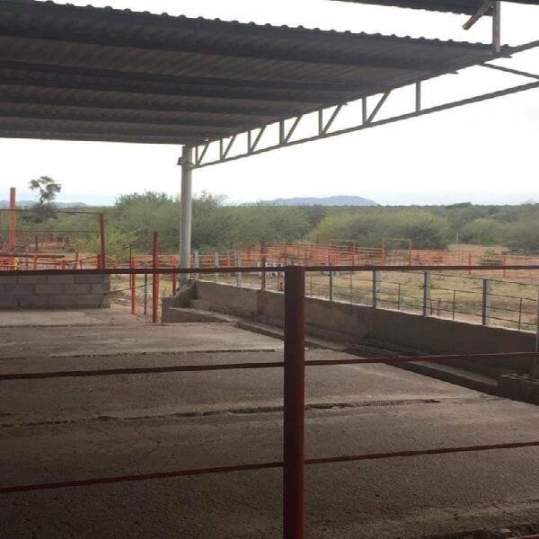 Se vende campo agricola, 50 hectareas