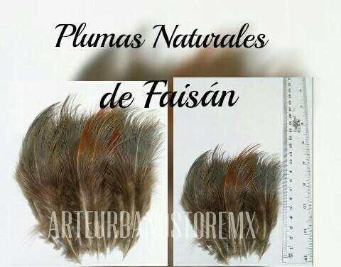 Plumas naturales de chinchilla $100 con 50 plumas faisan