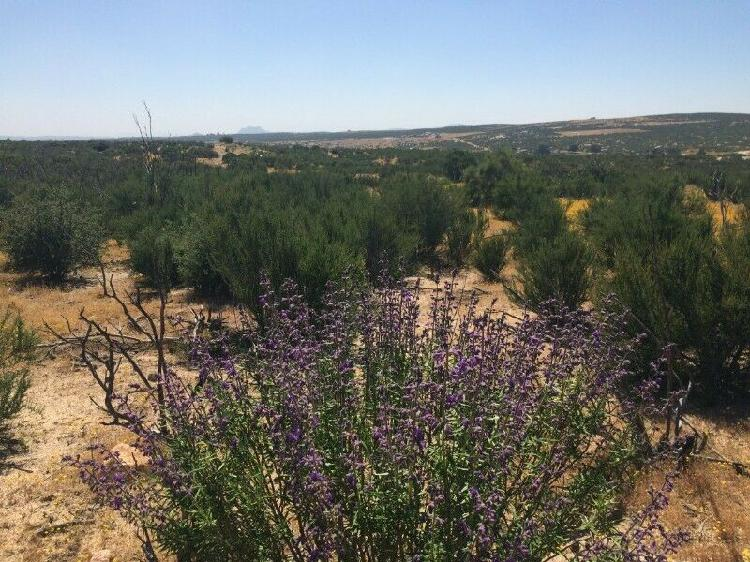 Oportunidad vendo hectáreas (10,000 mts 2) de terreno cerca