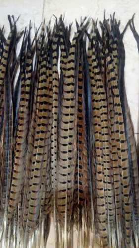 50 plumas de faisan 50-55 cm, no incluye envio