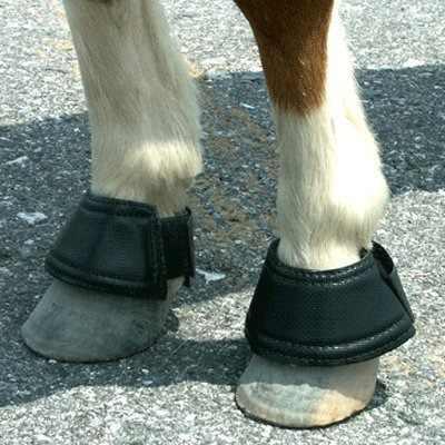 Caballo miniatura de bell boots por intrepid internacional