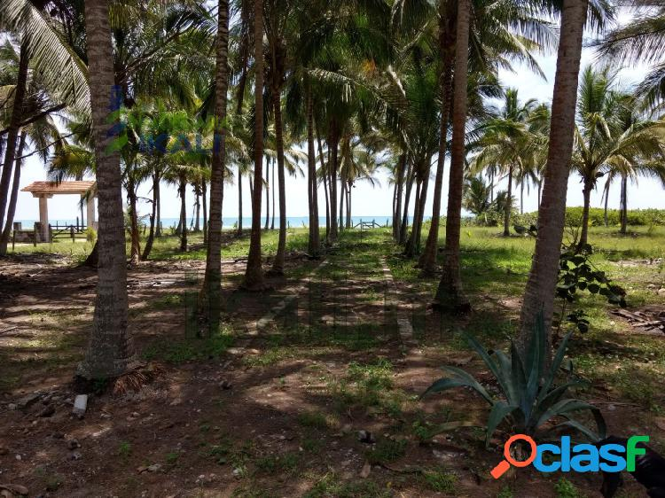 Venta rancho 100 hectáreas casa playa tamiahua veracruz, tamiahua