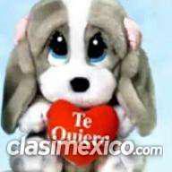 Chico romántico, Pachuca hidalgo