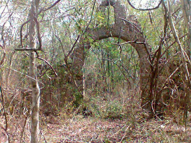Terreno en venta con cenotes ubicado en chemax yucatan