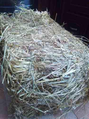 1 kg heno de paja conejos, cobayos, cuyos, roedores