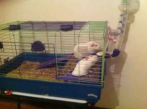 Jaulita para cuyos conejos o animales varios con bebedero