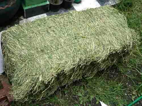 Oferta 2 kg heno: 1alfalfa + 1avena + envío conejos cuyos
