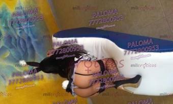 Paloma chica nueva en Cuernavaca independiente