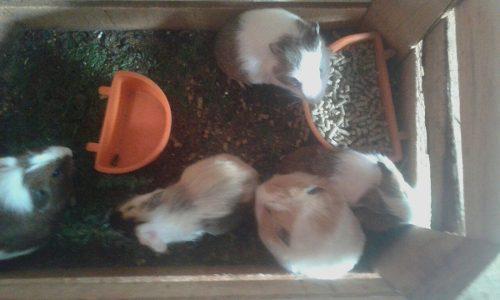Cuyos,roedores y mamiferos