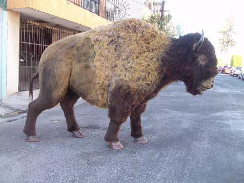 Animales disecados bisonte imponente cuerpo entero