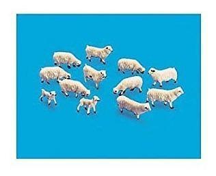 Ho ovejas y corderos (12)