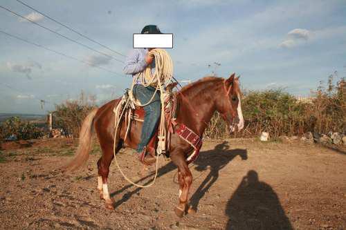 Maquila de caballos