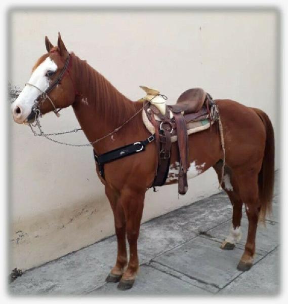 Venta de caballo