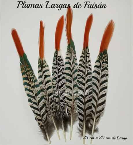 Paquete de 5 plumas de faisan largas de 25 a 30 cm de largo