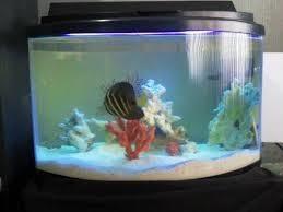 Pecera acuario marino panoramico peces marinos pez payaso
