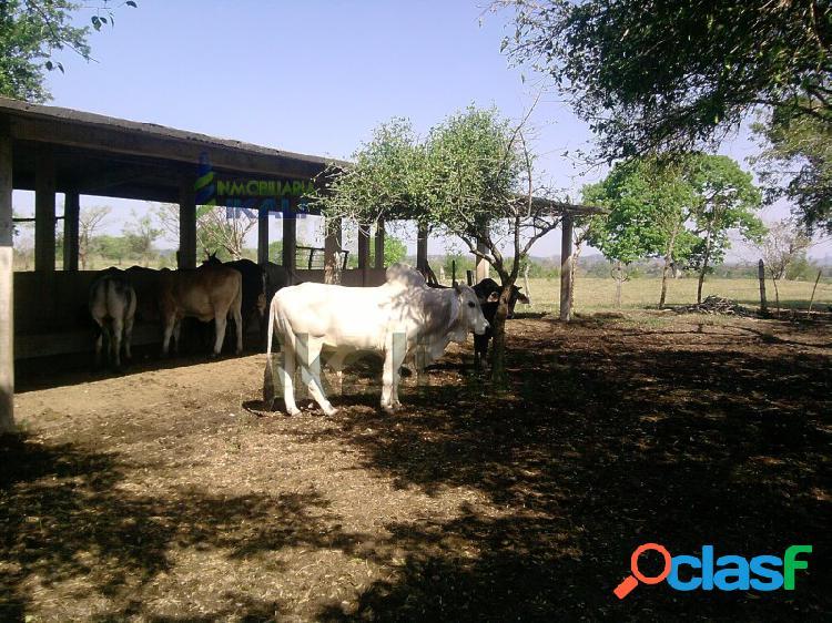Venta terreno 70 hectáreas col. francisco villa papantla veracruz, serafín olarte