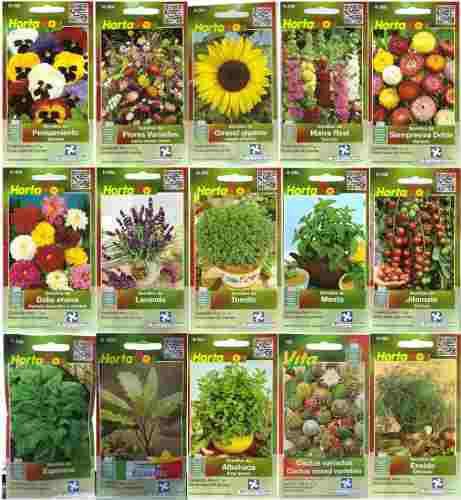 Semillas hierbas olor, hortalizas germinados. huerto en casa