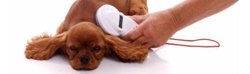 Microchip mascotas, perros, gatos, equinos, minipig