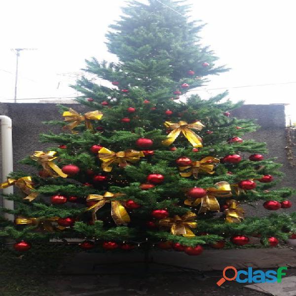 Arboles de Navidad Gigantes 7