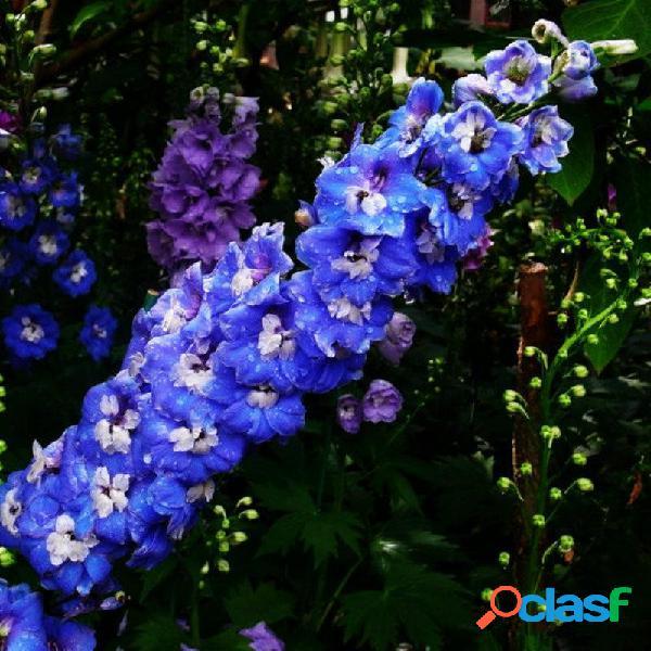 30 unids / bolsa azul púrpura blanco rosa delphinium plantación de flores de césped popular para jardín de casa
