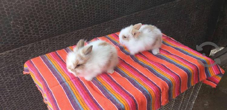 Granja de conejos qualy rabbits