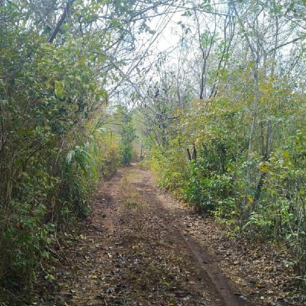 Venta 9 hectáreas a 2 km leona vicario