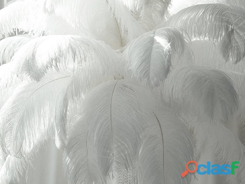 Plumas de avestruz blancas para decoración de bodas 1