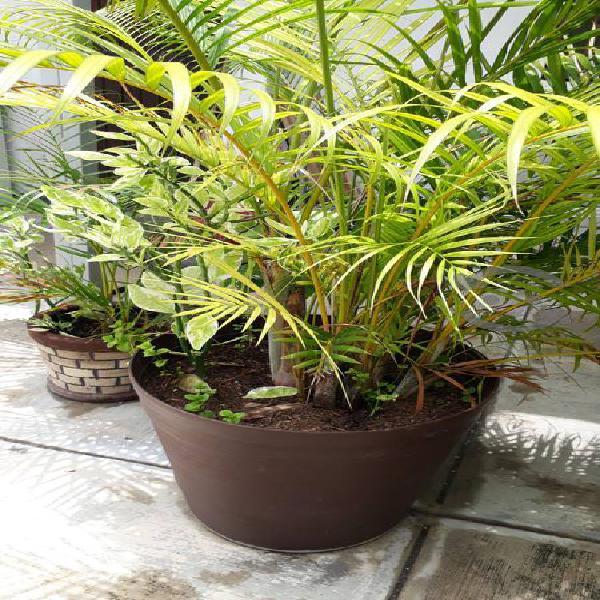 Plantas naturales, macetas grandes.