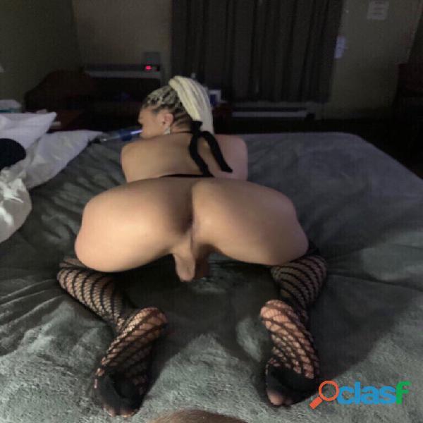 Sexymatianna latina