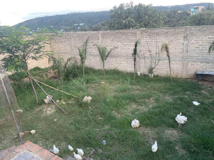 Adoptó aves terrestres