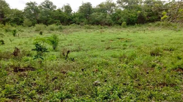 Oportunidad de adquirir terreno para ganadería en la zona