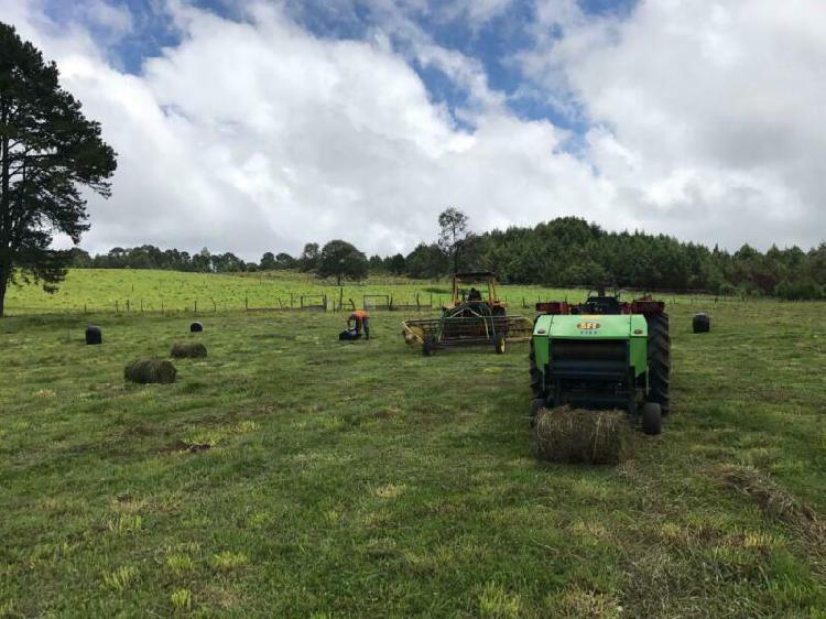 Se vende terreno ganadero de 52 hectáreas en Aldama,