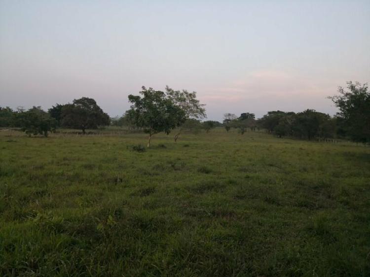 Terreno 10.23 Hectáreas a orilla de carretera Palenque,